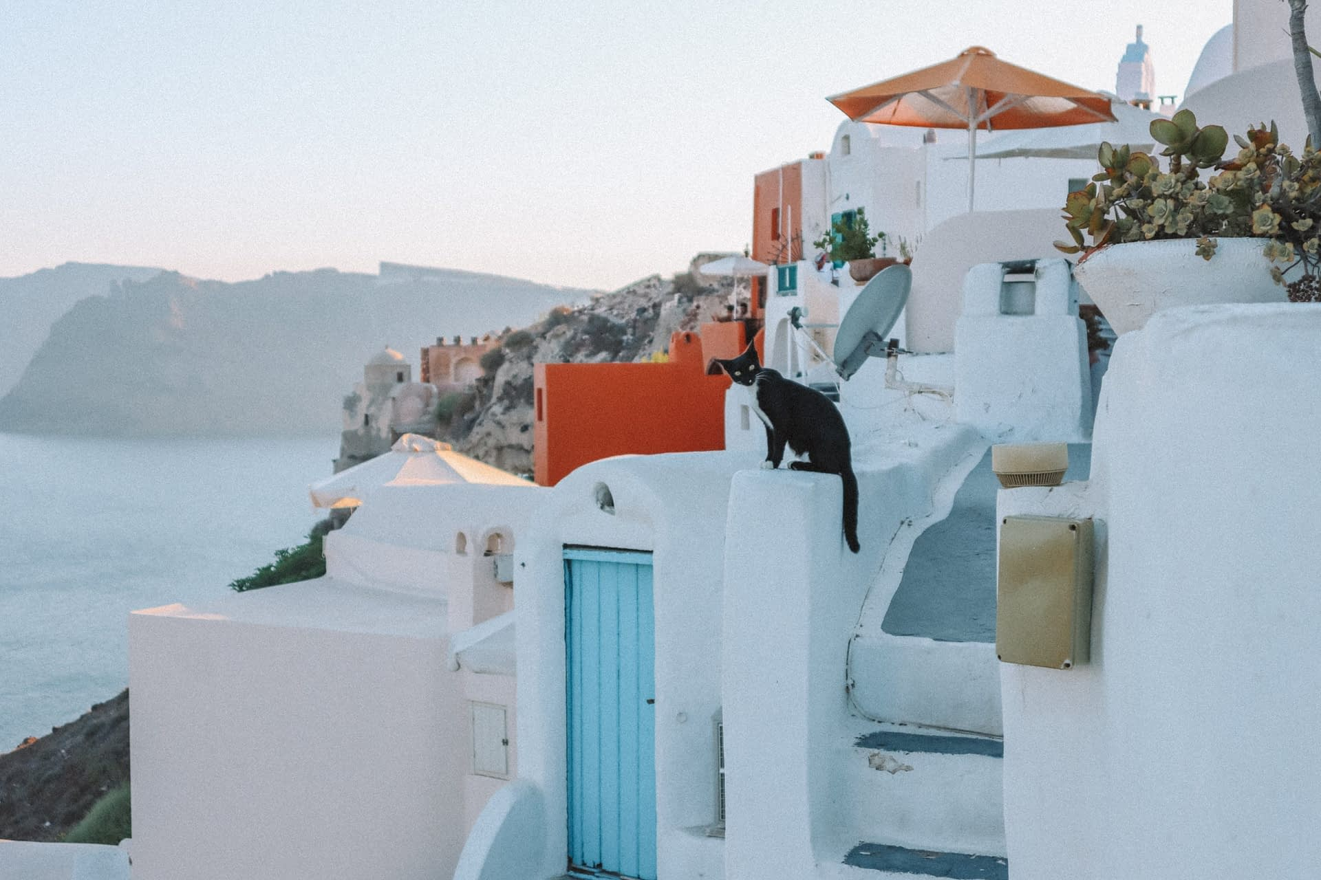 A cat sat on a whitewashed building in Oia, Santorini.