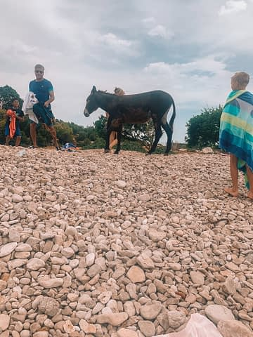 A donkey on a pebble beach surrounded by people