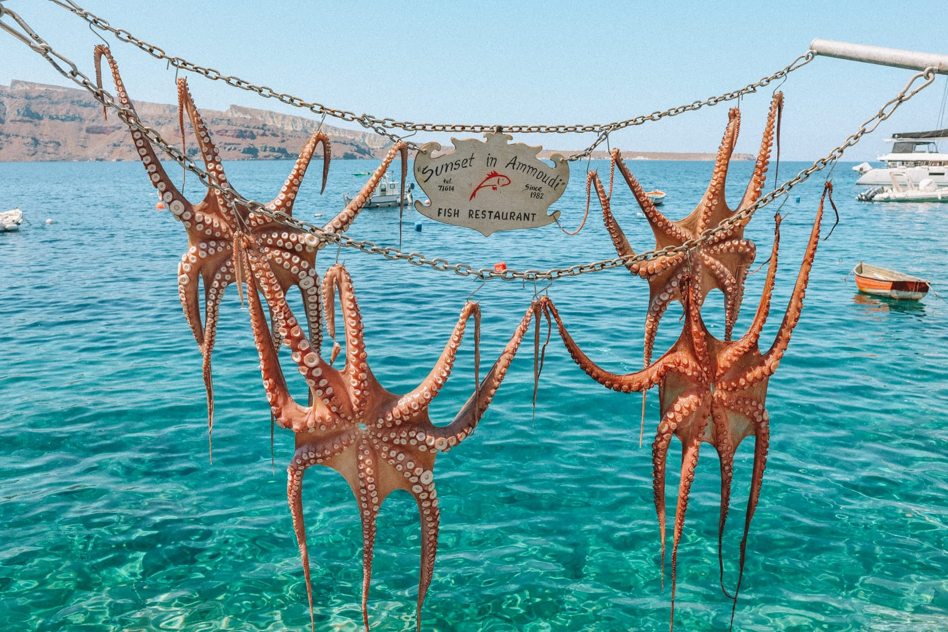 Octopuses drying out before being ready to be eaten with turquoise waters in the background