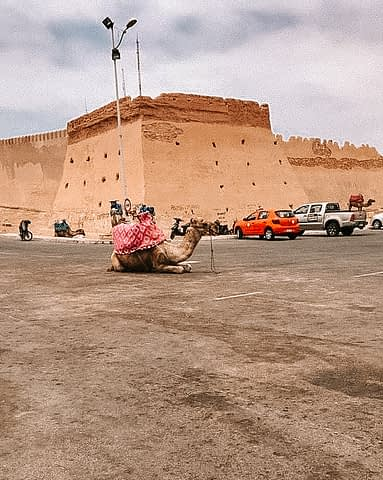 A camel lies down near cars next to the walls of Marrakech.