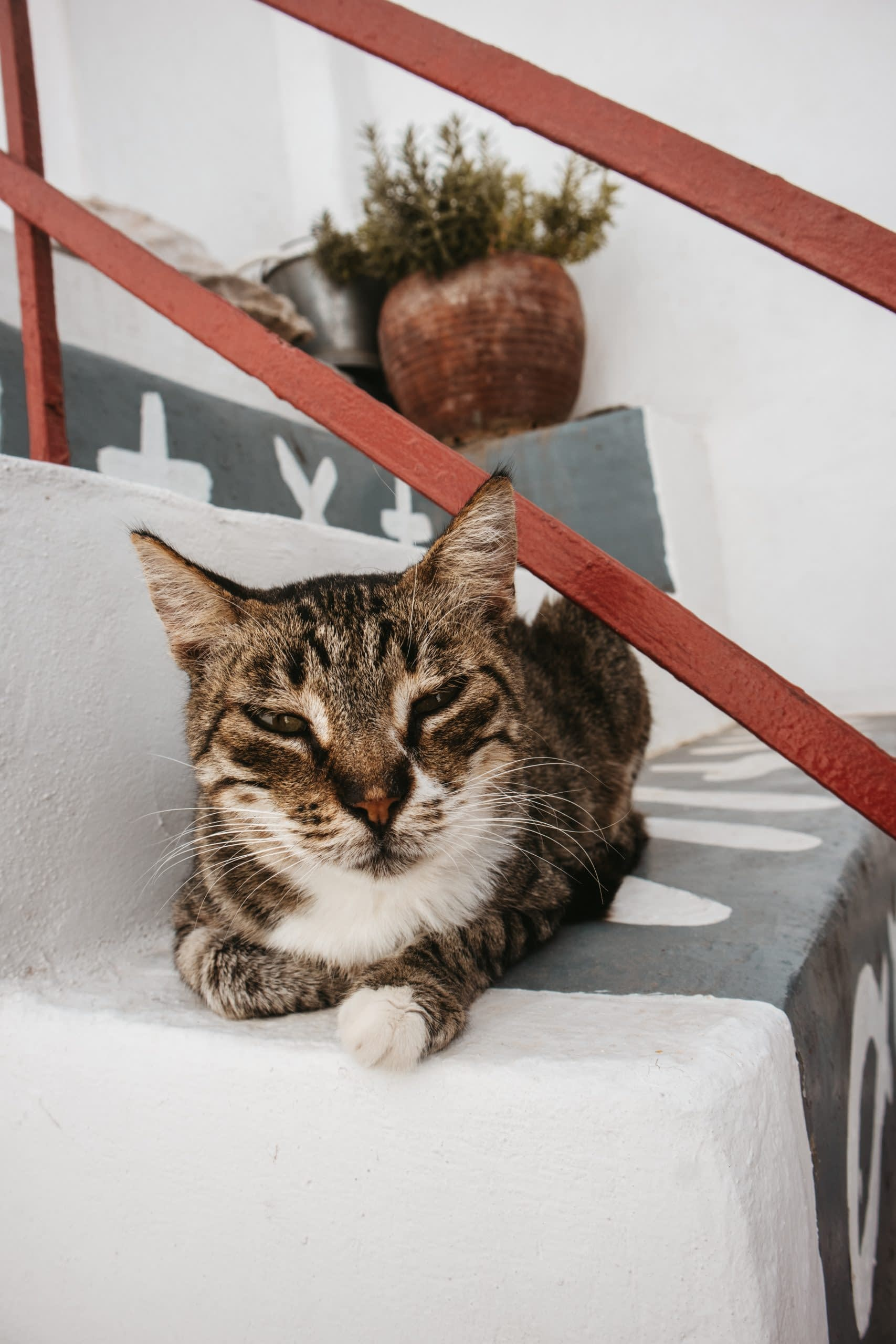 A cat relaxing in Parakia. Things to see in Paros
