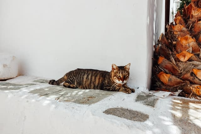 A cat in Folegandros sleeping and lying down on a wall.