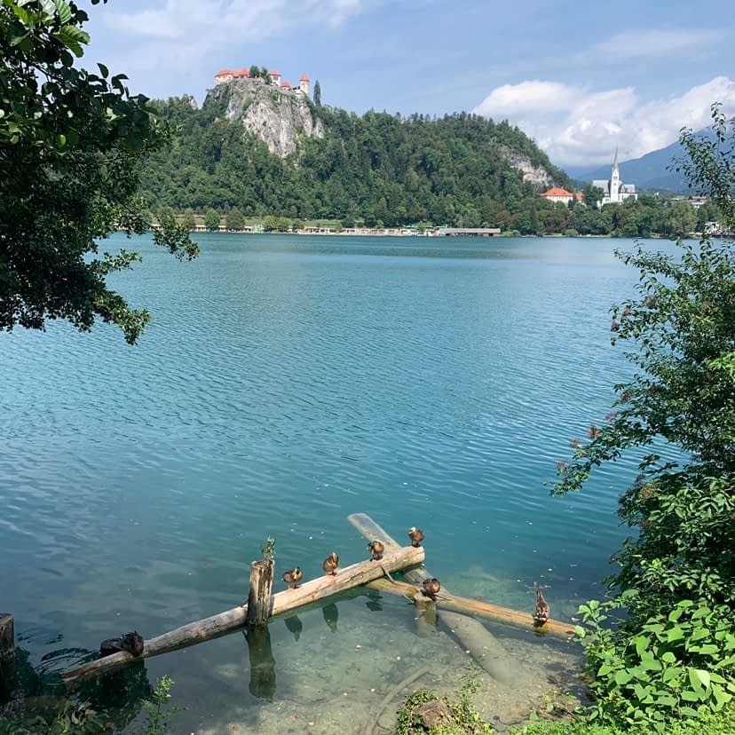 A view of Lake Bled and the castle in the background.