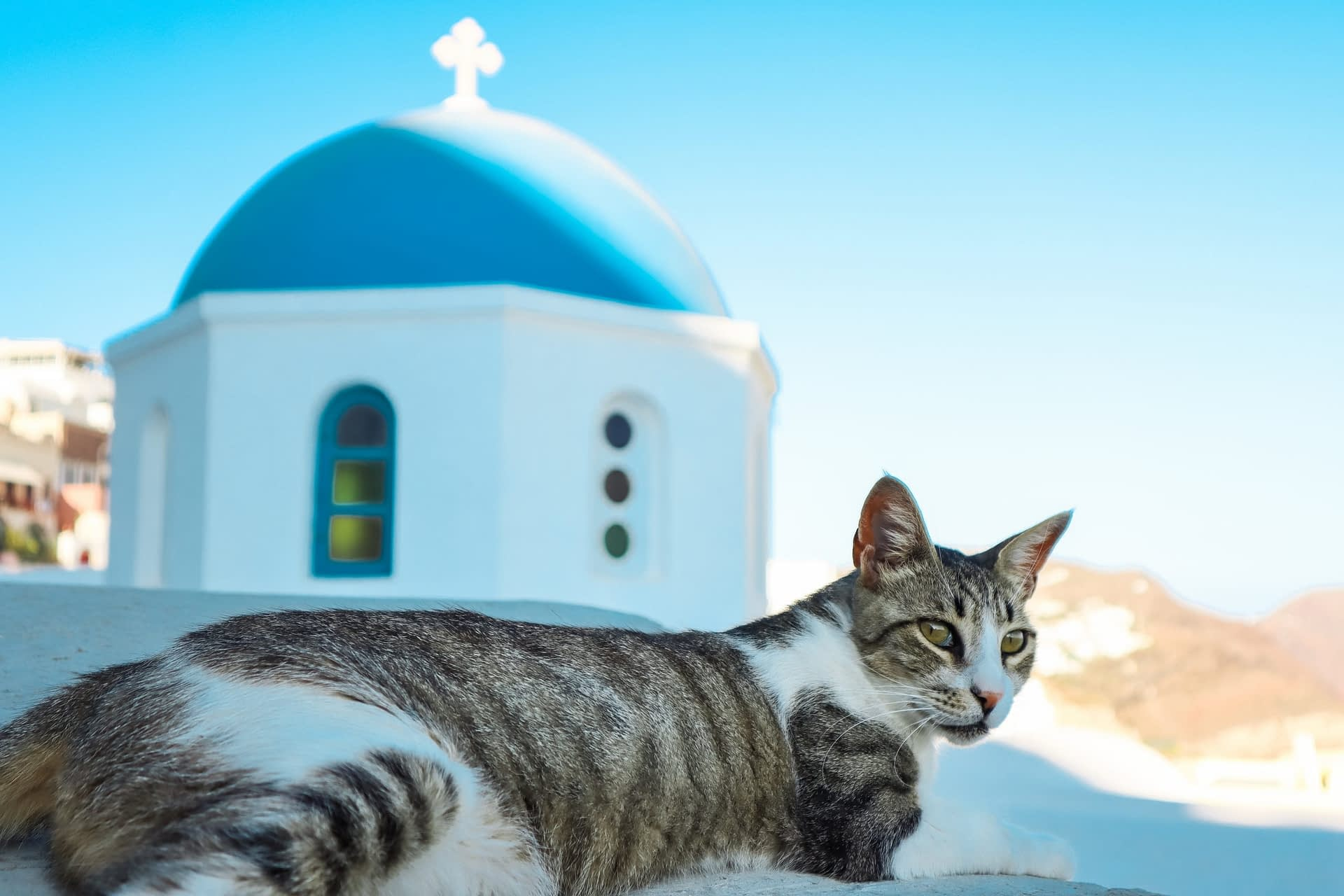 A tabby cat with the blue Santorini church dome behind it. Things to do in Oia